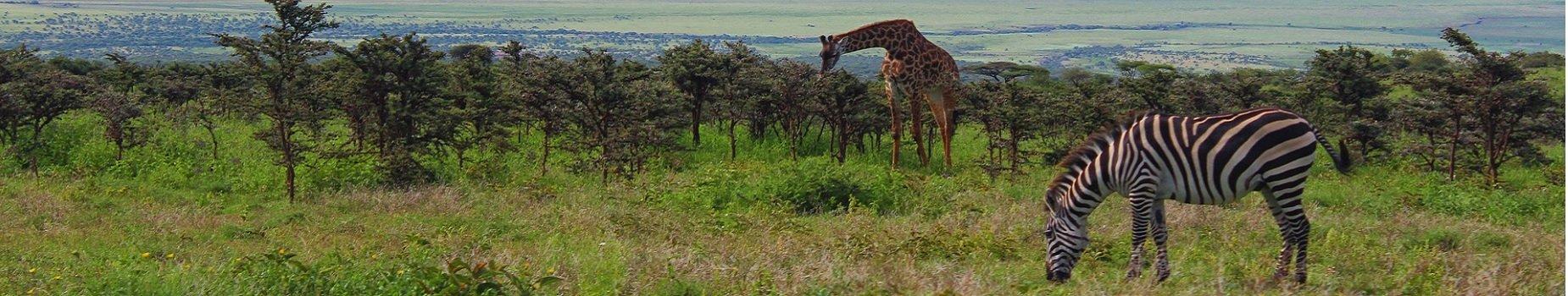 Vliegvelden Tanzania